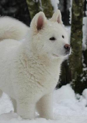 blush puppy